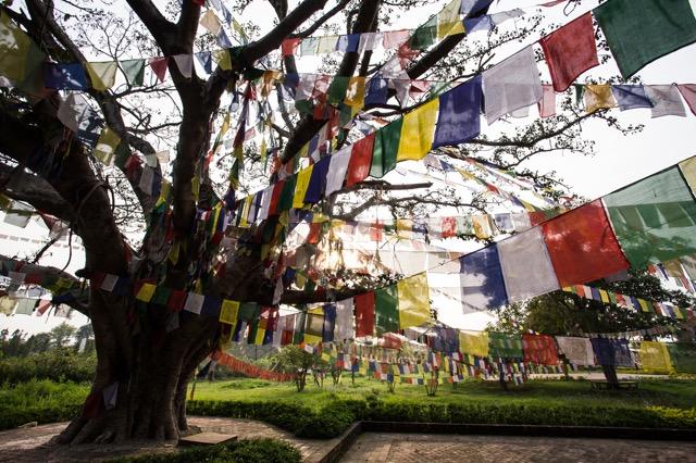 【ネパール】死ぬまでに一度は行きたい!ブッダが生まれたルンビニへの旅