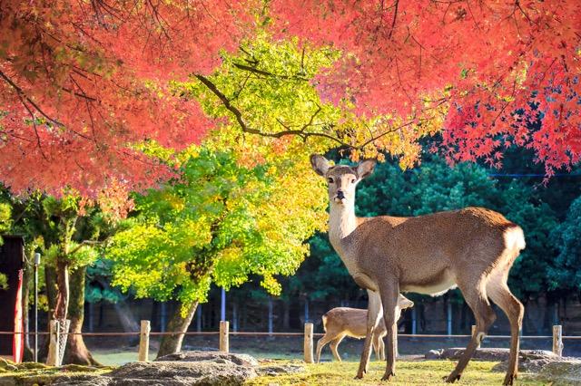 ニューオープンの奈良の観光案内所がオシャレすぎる!食堂やショップも併設「鹿の舟」