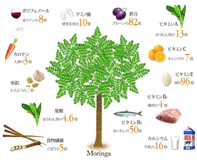 奇跡の木と呼ばれるスーパーフード、モリンガが本当にすごい!