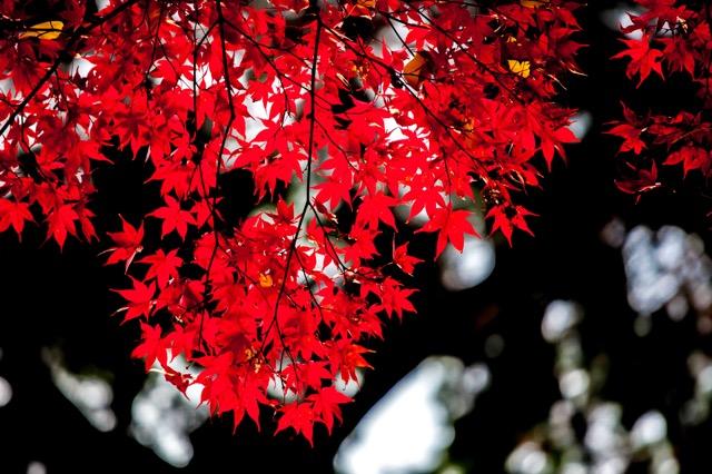 恋がしたくなる 秋の和歌、恋の和歌