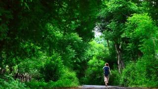 癒やし効果が科学的に実証!東京にある神秘的な森で週末散策