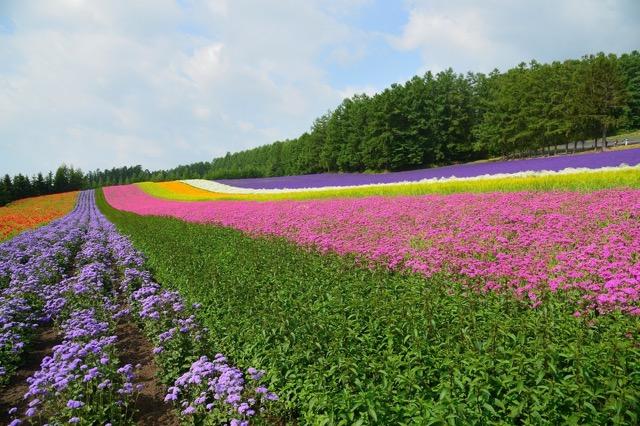 【北海道】日本政府観光局が外国人に紹介するドライブコースが美しすぎる
