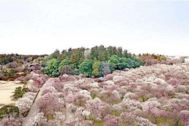 魅力度ランキング最下位の茨城県であえて魅力を探してみた!