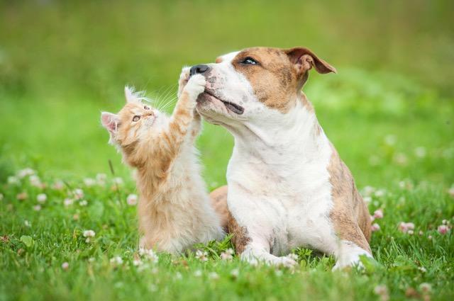 保護犬の譲渡を行うペットショップ「ペッツファースト」が伝える命の大切さ