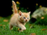心をほっこりさせたいときに!キュートな猫のトリビア3つ