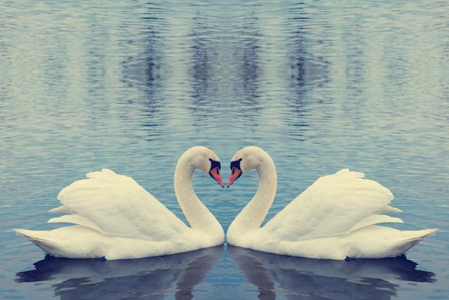 バレンタインに愛のある風景を。幸せに寄りそう動物の恋人たち