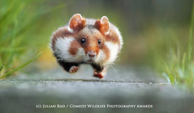 激写!思わずクスっとしてしまう、世界のかわいい野生動物の写真