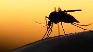 旅人は必見!4人目の感染者が出たジカ熱の注意点と要注意エリア