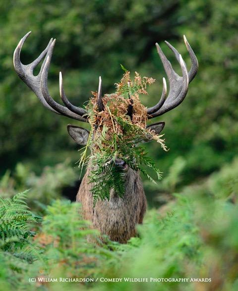 激写!思わずクスっとしてしまう野生に住む動物写真