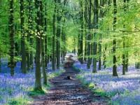 イギリスの春を知らせる青い絨毯、ブルーベルの森が美しすぎる!