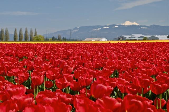 心が洗われるよう・・・アメリカ北西部・美しい花の絶景3選