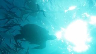カリブ海に浮かぶ南国の楽園「バルバドス」のベストスポット3つ