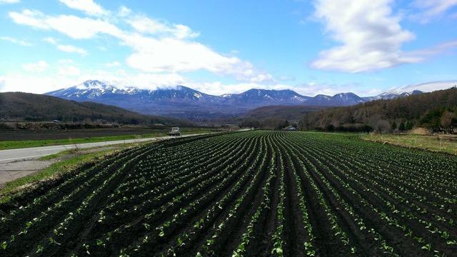 ここは北海道!?見渡す限りキャベツ畑の広がる【嬬恋村】が美しい