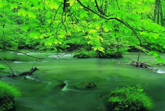 心にたっぷり緑のシャワー 新緑奥入瀬渓流