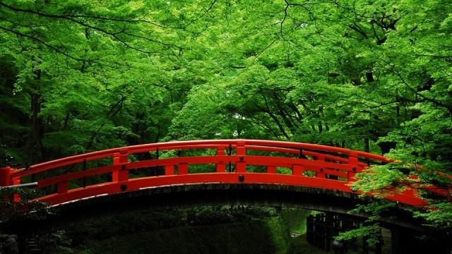 【京都】青もみじが美しい。初夏に訪れたい、京都の神社仏閣5選