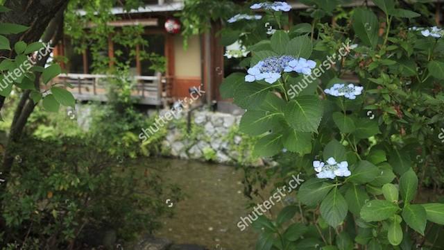 初夏の京都、行ってみたい新緑のカフェめぐり5選