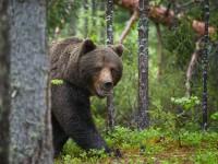 あなたも知っておいた方がいい、クマに遭遇したときの対処法