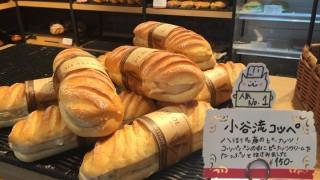 日本最大級のドッグランにワンコ興奮!東京から55分のリゾート施設