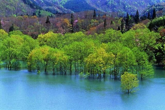 【世界遺産】白神山地の十二湖 ミステリアスブルーの青池
