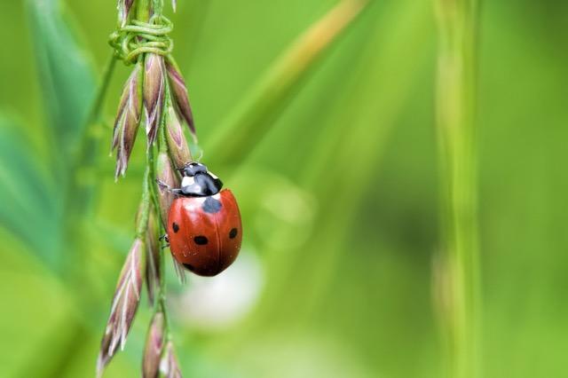 ドローンからてんとう虫を散布?デンマークの「EcoDrone project」
