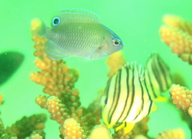 【タイ】バンコクから日帰りトリップ!パタヤの海で出会うかわいい水中生物