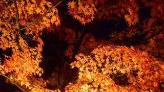 【首都圏紅葉ライトアップ5選】恋心が燃え上がるロマンティック・ナイト