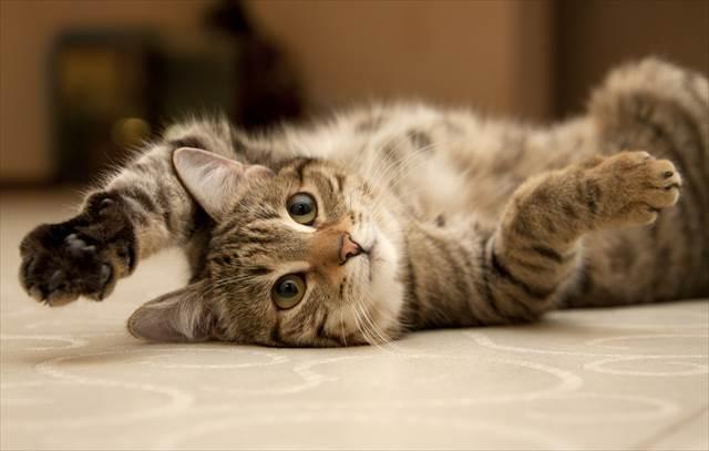 にゃんこがあなたの気持ちを伝えてくれる!今すぐ欲しいネコグッズ