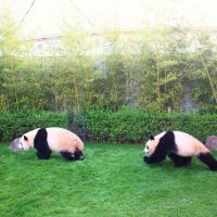 【和歌山】大人も楽しめる!アドベンチャーワールドでパンダ三昧の一日/現地特派員レポート