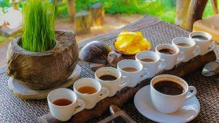 バリに行ったら必見!世界一高級なコーヒーの秘密を徹底解剖!