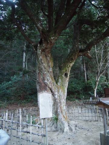 【出世運も高まる】遠州の魅力をたっぷりと味わえる掛川・浜松のおすすめスポット
