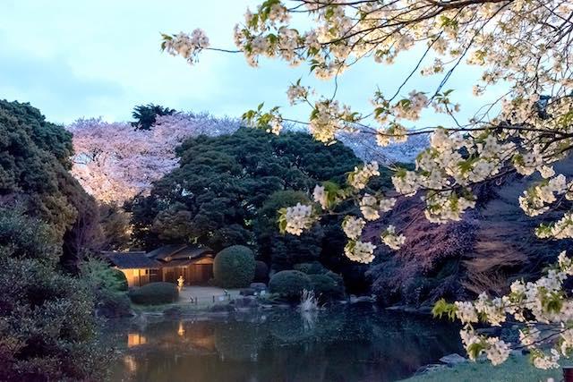 【首都圏夜桜】舞い散る花吹雪。胸騒ぎの夜桜ライトアップ5つ