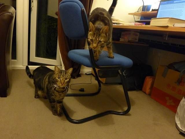 愛猫の秘密。天国に行った猫を心配する手紙を受け取ったカップルのお話