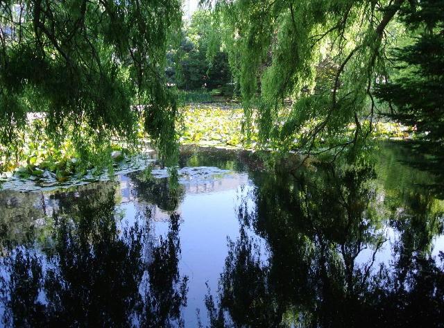 北海道にもあるモネの池・モネの名画「睡蓮」と道庁の池にはどんな関係が?/現地特派員レポート