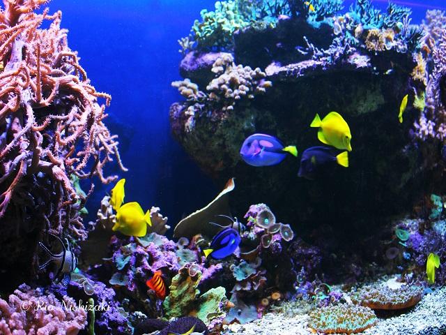 魚が海から水槽に里帰り!スウェーデンの小さな水族館の不思議/現地特派員レポート