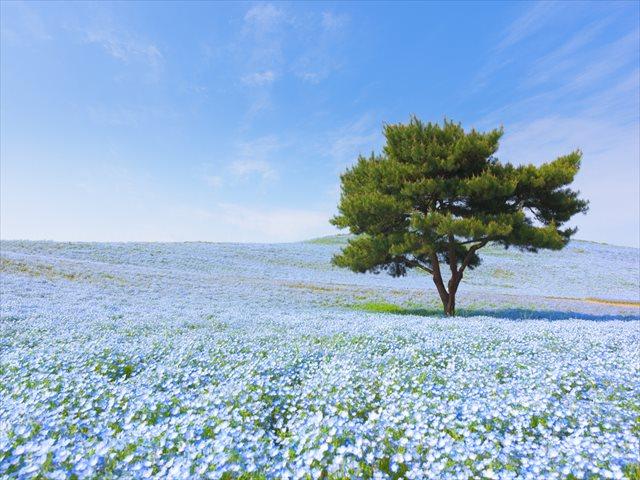 【首都圏近郊GW日帰り旅】春を描くカラフルな花のパレット