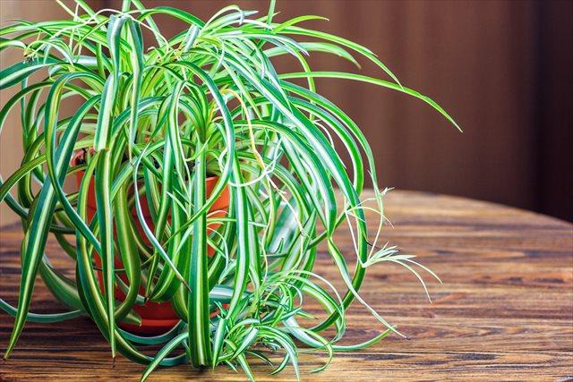 5月病を慰めてくれる?観葉植物人気ランキングベスト10