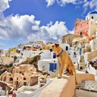 条件は、ペットの世話。旅先の豪邸に泊まれるチャンス?