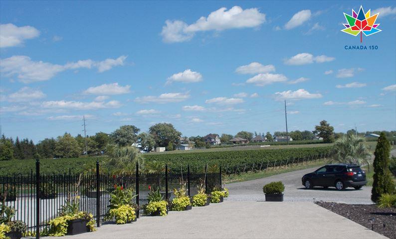 建国150年のカナダ・ナイアガラでワインツアーに参加しよう