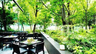 【大手町】都心の森に癒される、寛ぎのアフタヌーンティー