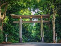 ミシュラン三ツ【星】100年の森 明治神宮へ夏詣でしたい8つの理由