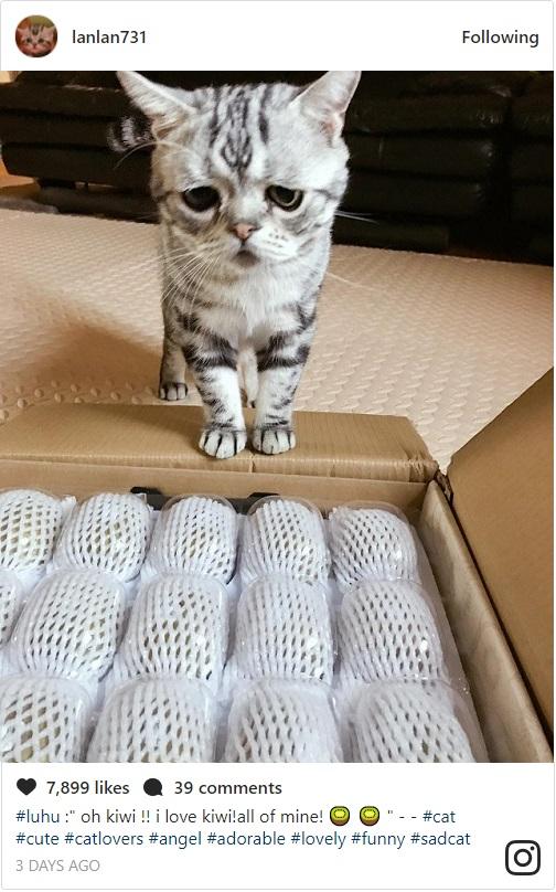 なぐさめてあげたい!世界一切ない表情の猫Luhu