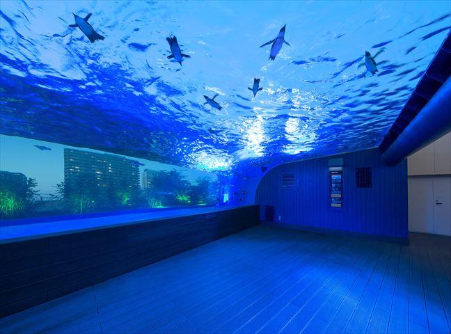 サンシャイン水族館でロマンチックな夜を。イルミネーションとこたつカフェも
