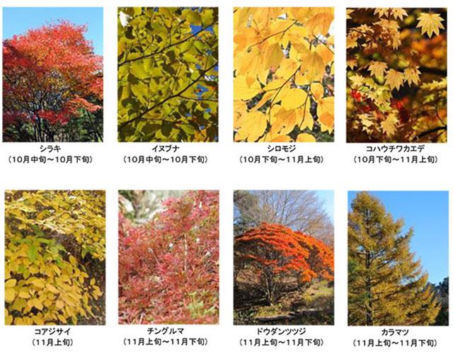 赤・黄・橙の色の共演!ピークを迎えた六甲高山植物園の「紅葉」を見に行こう!