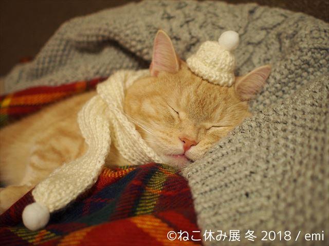 <ねこ好き必見>「ねこ休み展」2018年第一弾開催!