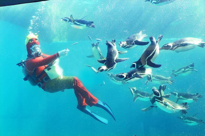 シロイルカ?マゼランペンギン?今年の節分は「海獣」と楽しもう!