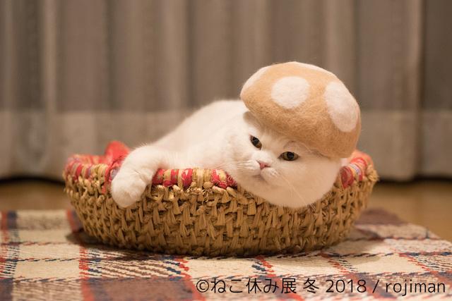 169947<ねこ好き必見>「ねこ休み展」2018年第一弾開催!