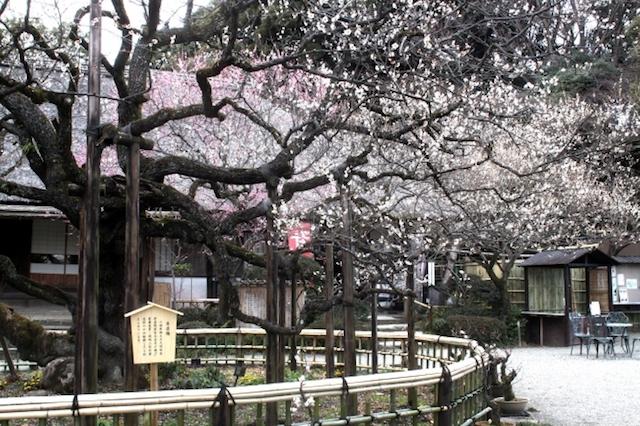 今週どこ行く?東京都内近郊おすすめイベント【2月15日〜2月21日】無料あり