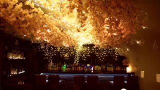 8,000輪の桜がイルミネーションに照らされる幻想的な 「吉祥寺 夜桜 2018」開催中
