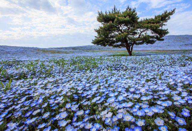 東京の次で大阪超え!公式観光サイト人気ランキングNo.2【茨城の魅力】10選