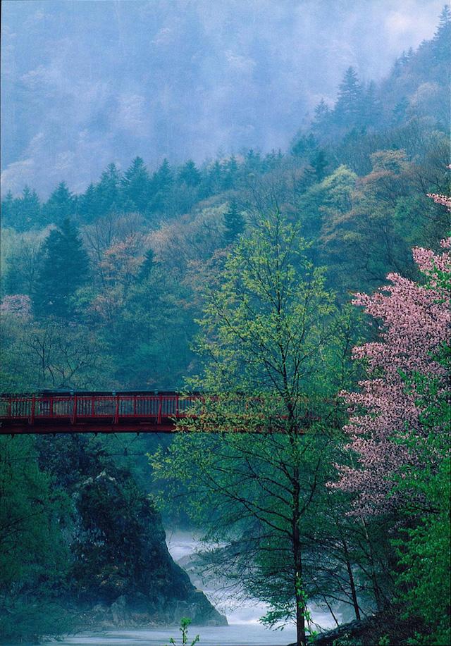 【春のひとり旅どこへ行く?】 経験者がすすめる都道府県ダントツ1位は。